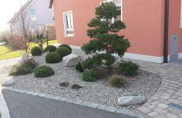 Pflanzen & Dekoration